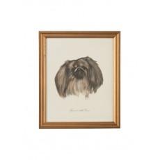 Dog Lithograph - Spanial Della Cina