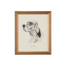 Dog Lithograph - English Setter