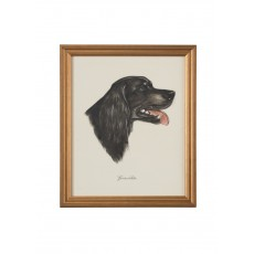Dog Lithograph - Gordon Setter