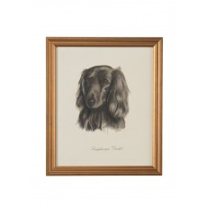 Dog Lithograph - Langhaariger Dackel