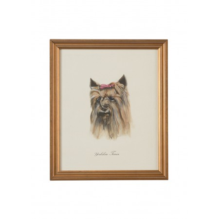Dog Lithograph - Yorkshire Terrier