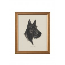 Dog Lithograph - Scotch Terrier