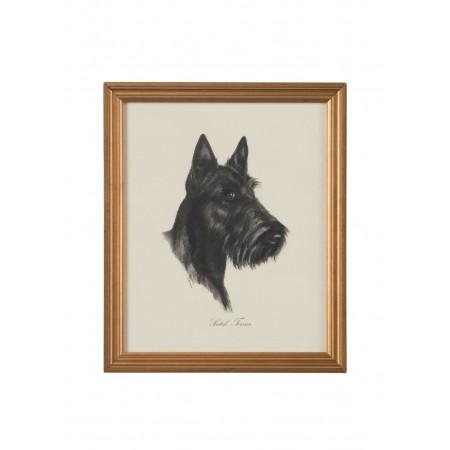 Dog Lithograph - Scotch Terrier
