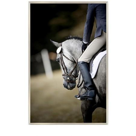 Equestrian Club II